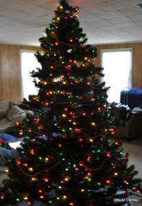 My tree sans decorations