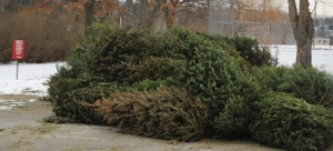Many trees had been dropped off at the end of January.