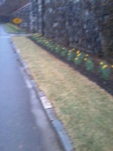 Roadside across from the gardens