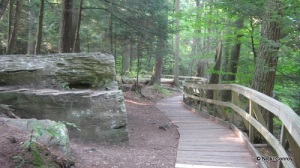 Boardwalk along the Overlook Trail at Salt Springs State Park