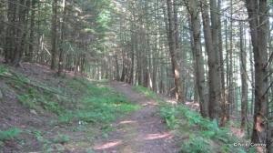 Bunny Trail - I think